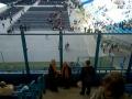 Na schodach stadionu